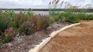 Xeriscaping | Save Tarrant Water