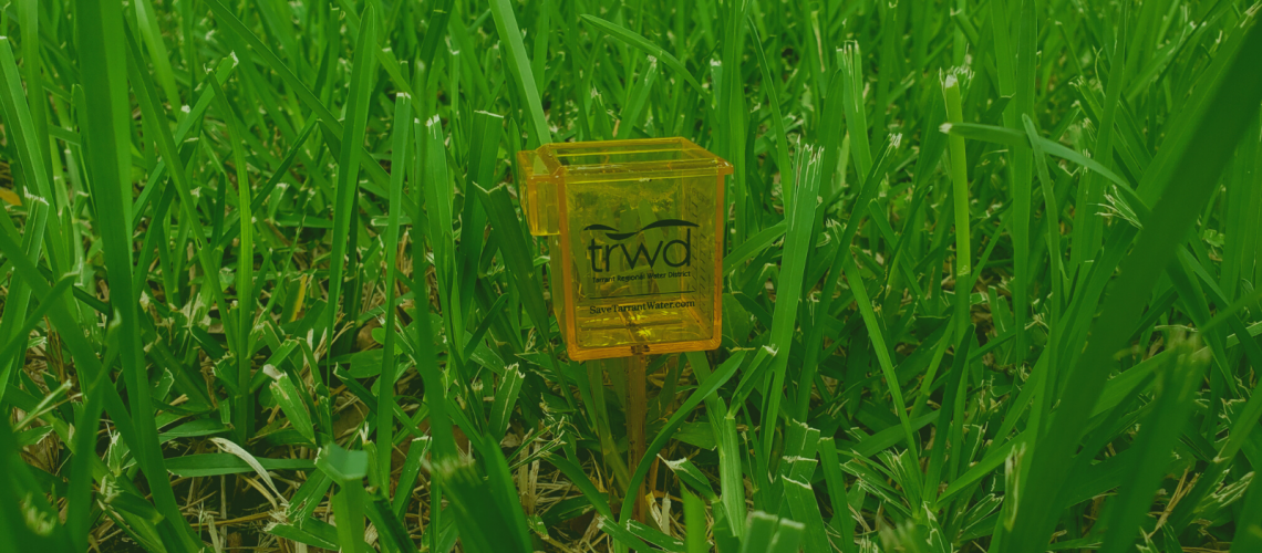 TRWD cup in grass